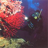 Экскурсии в Турции - Подводное плавание