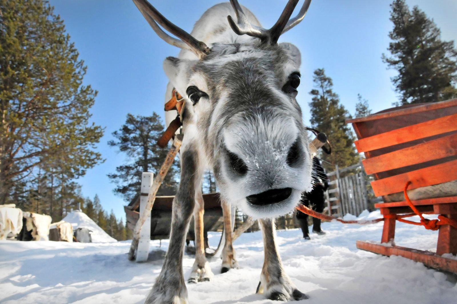 Авиатур в Финляндию. В гости к Санта Клаусу
