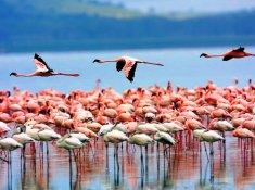 Туры на о. Занзибар (Танзания) 2020 год