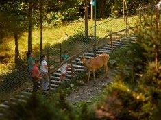 Семейная база отдыха в Карпатах «Медвежья гора»